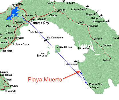 By Air to Bahia Piña - While this option has the highest upfront price tag, a flight is the only way that you can leave from Panama City to arrive in Playa Muerto in the same day and will save you the grueling 2-day overland route. Flights leave at 10:15 am every Monday and Friday from the Albrook International Airport (This is the airport next door to the national bus terminal, not to be confused with the Tocumen Airport where you probably flew into Panama). The hour long flight will land in the coastal community of Bahia Piña, home of the world famous fishing resort, Tropic Star Lodge. After enjoying a locally prepared lunch a boat will take you the rest of the way on a 2 hour journey along the coast of the pristine jungle of the Darien National Park before arriving in your final destination of Playa Muerto.Airpanama.com- Flights for $89.50 leaving every Monday and Friday