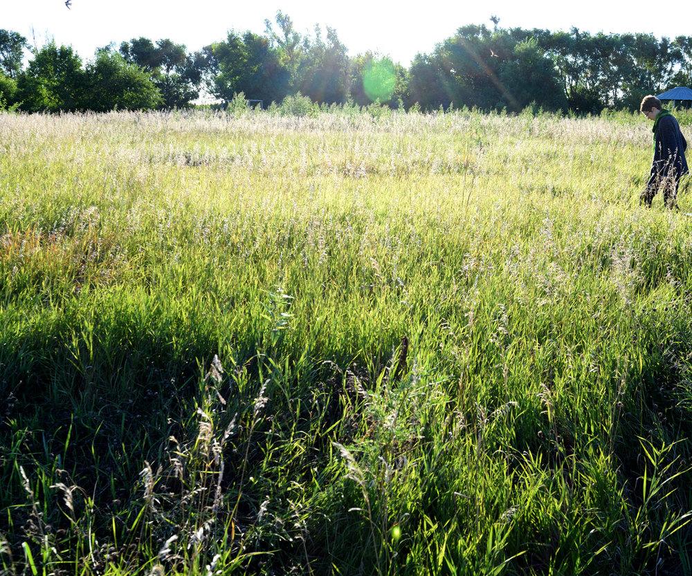 artfarmflora02.jpg