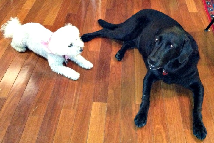 The family dogs, Sace and Mollie.