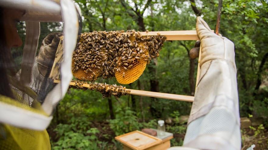 Hive Tour pic 3.jpg