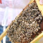 KXAN visits the Sustainable Food Center and Two Hives Honey