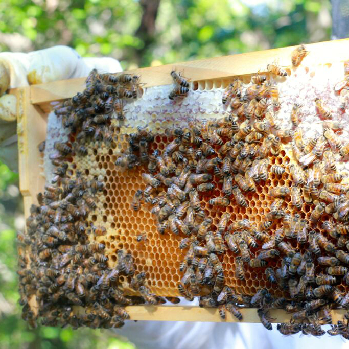 frame in color bees and honey (1).jpg
