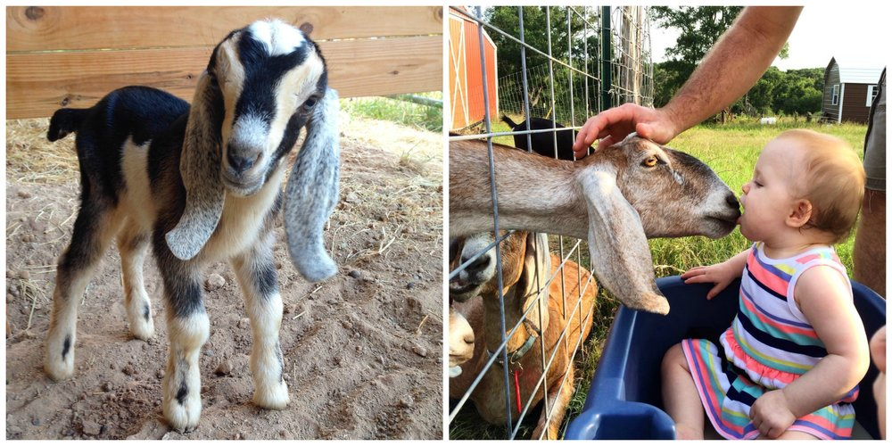 Yes, there will be petting of the goats.