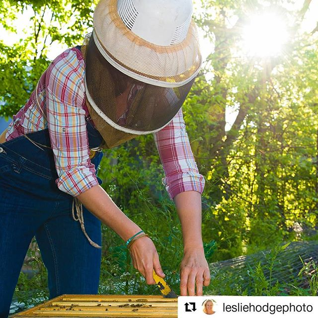 😍😍 thank you @lesliehodgephoto for capturing this moment in a beautiful photo.  #Repost @lesliehodgephoto (@get_repost) ・・・ I'm so fortunate to have the opportunity to experience things I wouldn't normally as a photographer. Thank you Tara Chapman of Two Hives Honey for introducing me to the fascinating world of bees. 🐝 #editorialphotography #beekeeper
