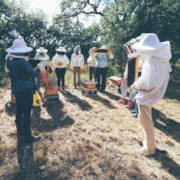 Discovering Austin takes a bee hive tour with Two Hives
