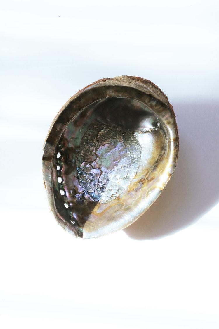 Sunday Forever Abalone Shell $22