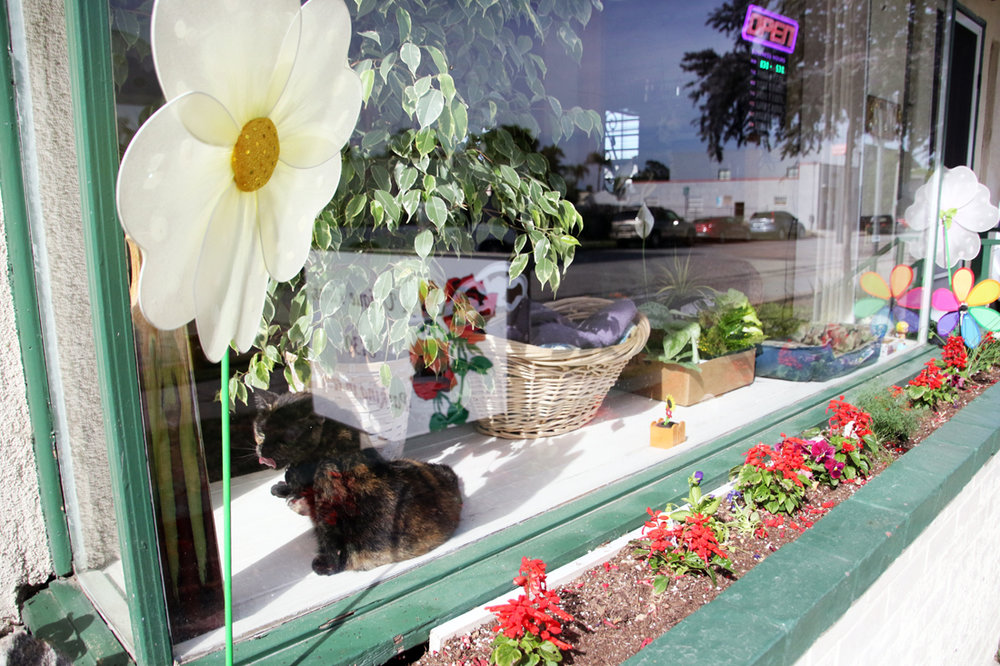 A Unique Florist's window display. Photo by Eric Pierce