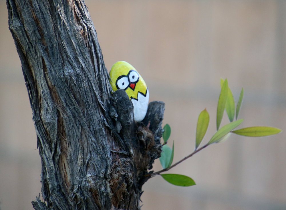 A decorated rock left in a park tree. Photo by Alex Dominguez