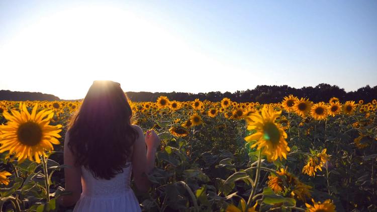 17c6c2de2c416 videoblocks-young-girl-walking-along-sunflowers-field-under-