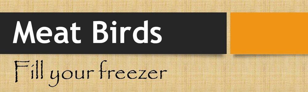 Meat Birds.jpg