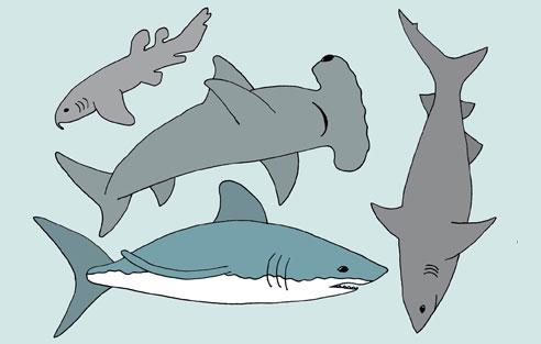 ocean_shark.jpg