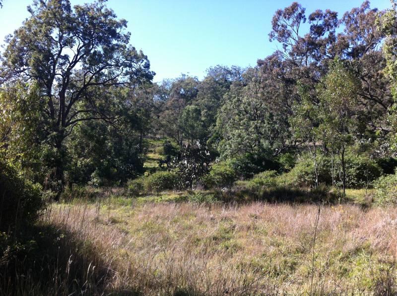 Cranley_Escarpment_Park_Toowoomba_image3_LARK_Sunshine_Coast_Landscape_Architect