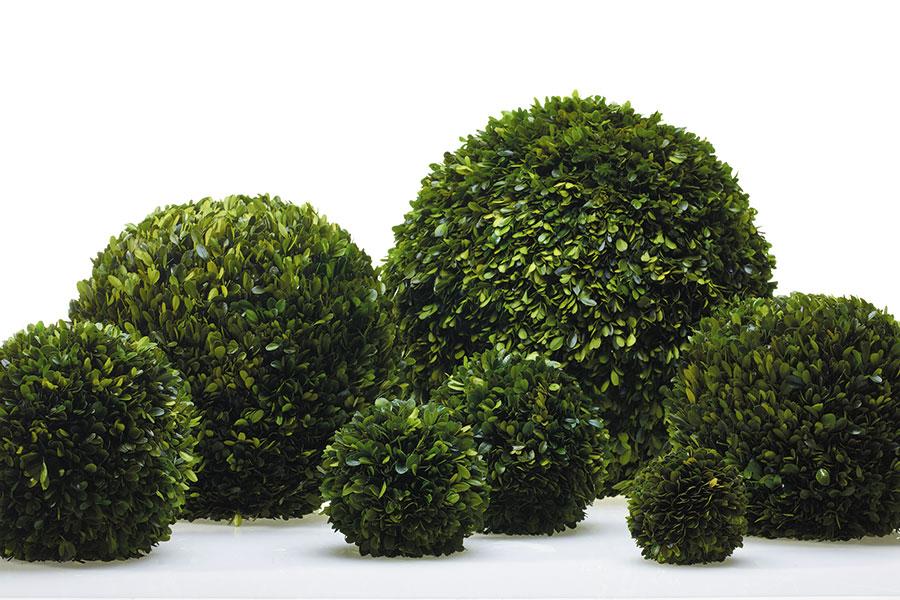 Boxwood Hedge Balls