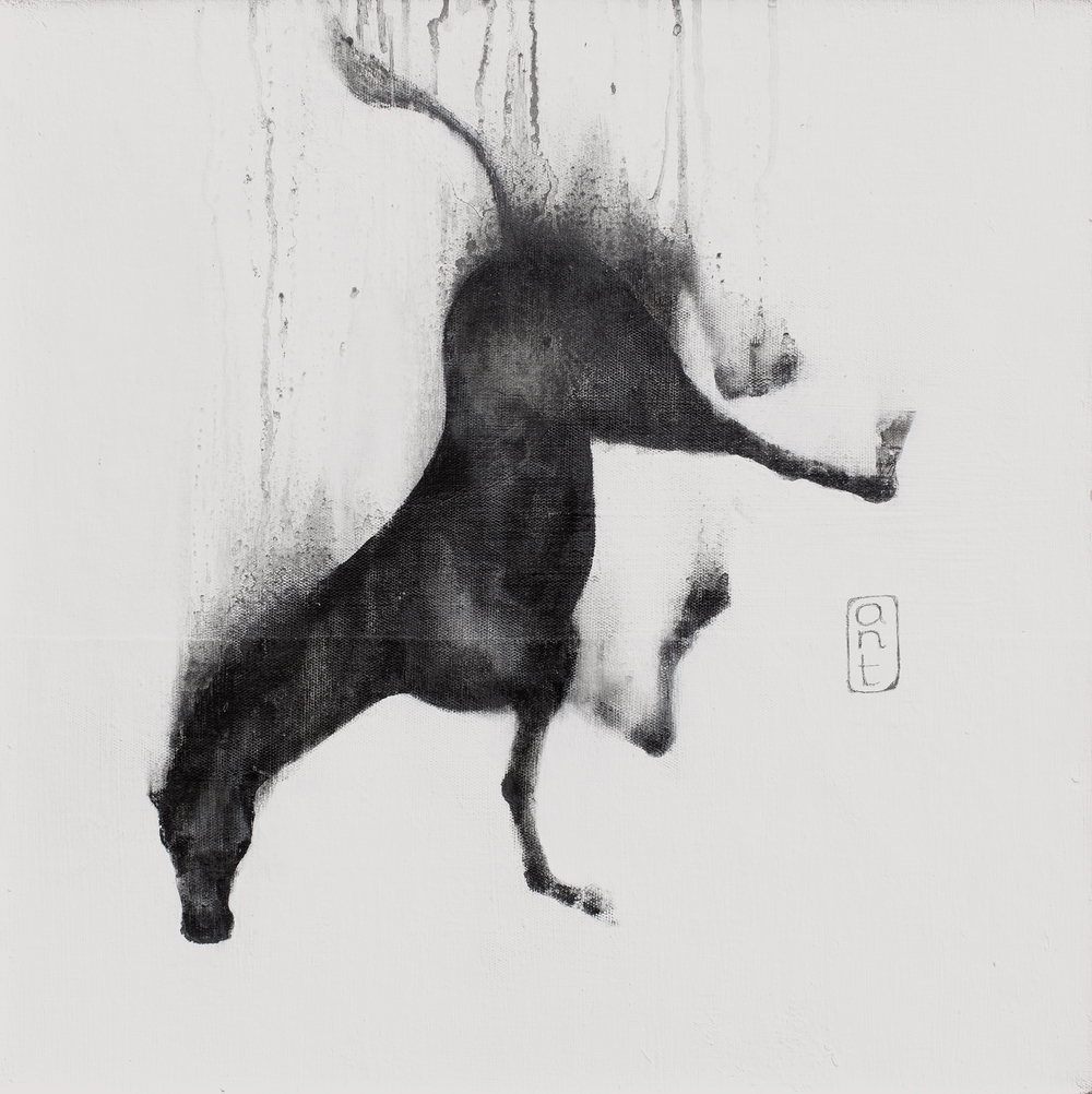 SOLD  2010. Falling Horses: Mia, Pigment & Gesso on Linen. 500 x 500mm.