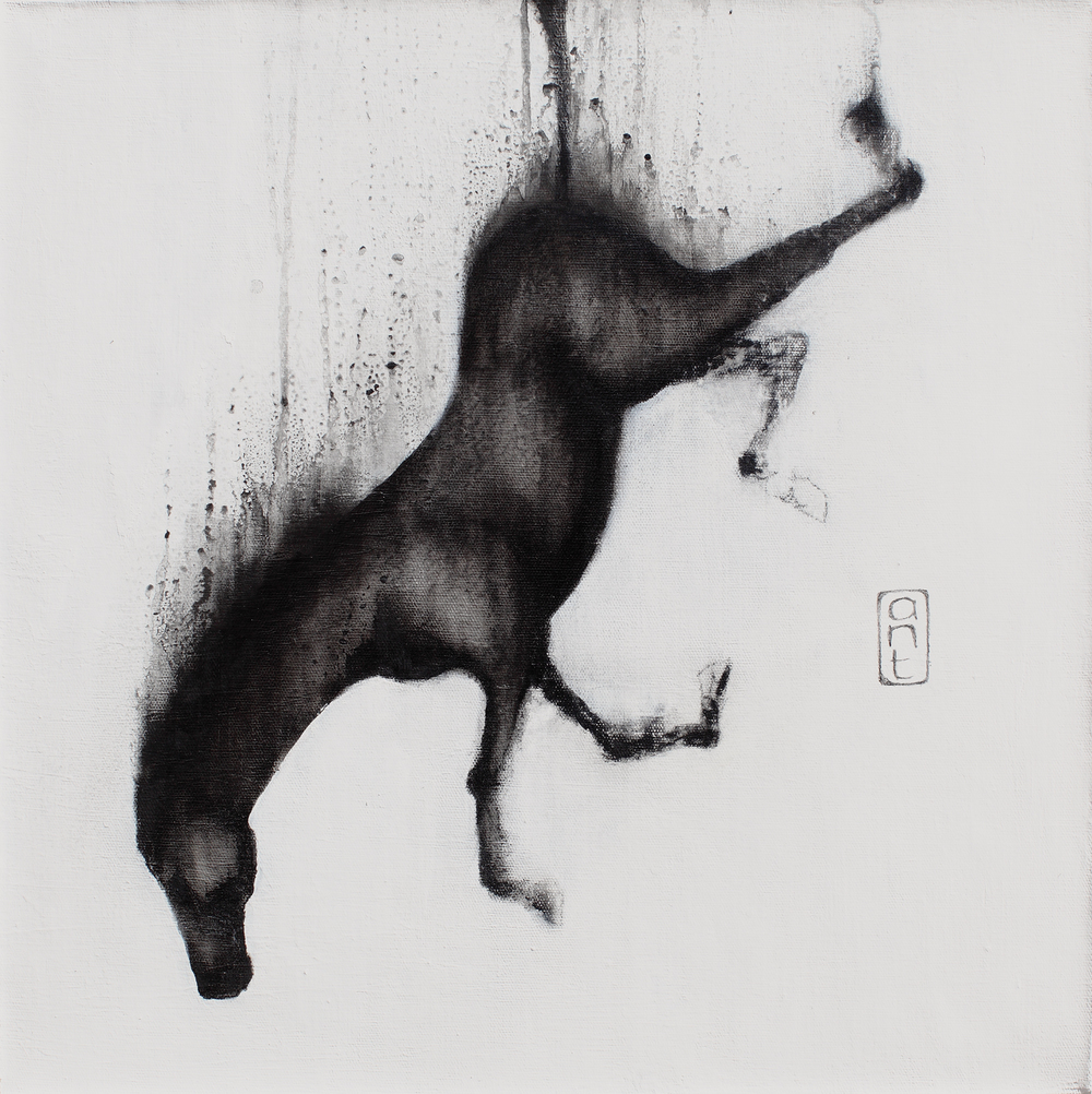 SOLD  2010. Falling Horses: Nico, Pigment & Gesso on Linen. 500 x 500mm.