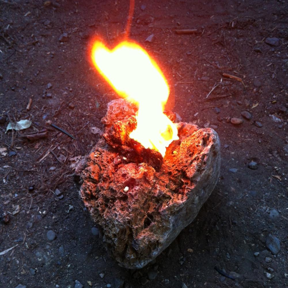 pine sap lamp