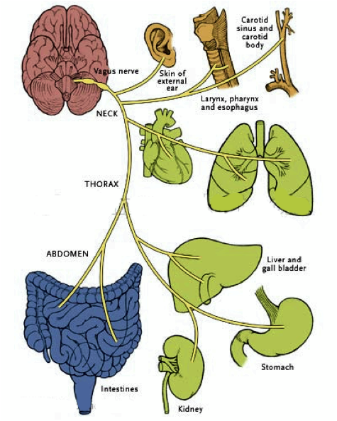 Vagal Tone and its effects on multiple organs.