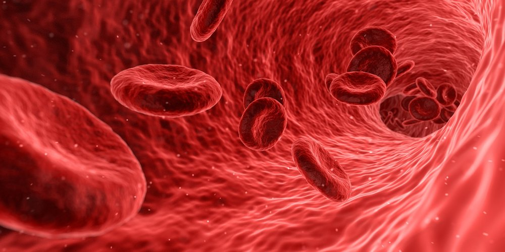 The Blood  - The power of your bodies stem cells & growth factors