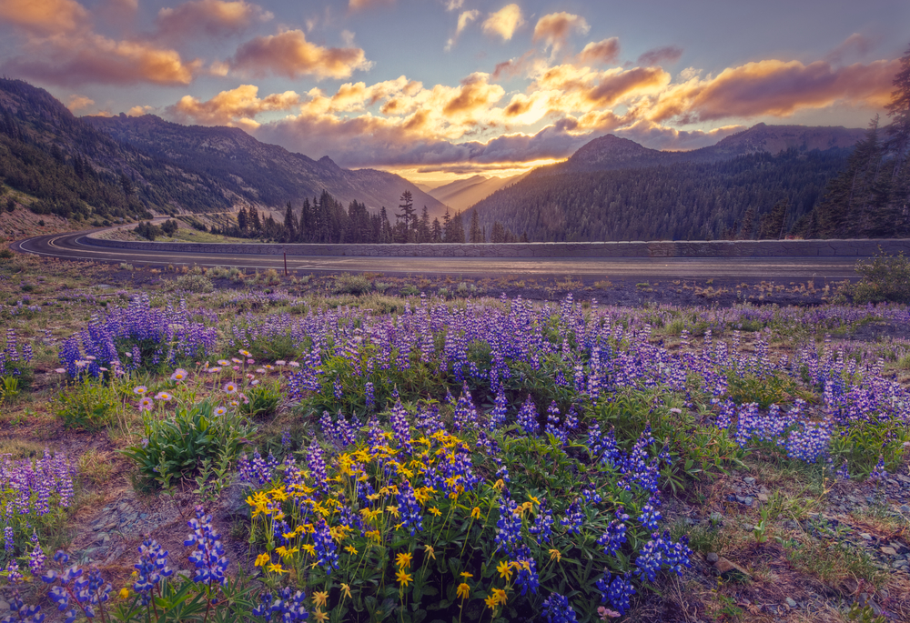 Sunrise in Mt Rainier National Park