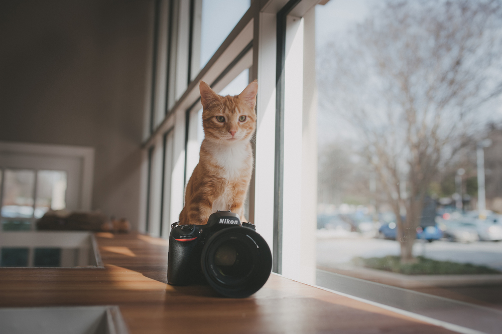 Anji Martin - Kodak Portra 160
