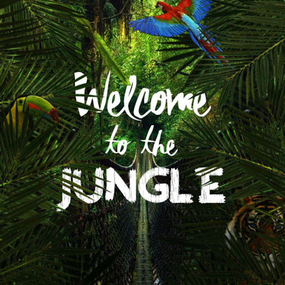 Box à thème - Welcome to the Jungle