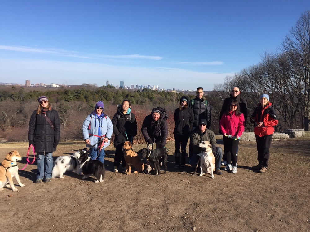 Group of dog lovers on top of Peter's Hill in the Arnold Arboretum. Views of Boston in the background.