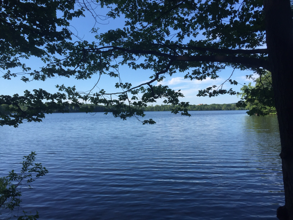 Fresh Pond in Cambridge, MA