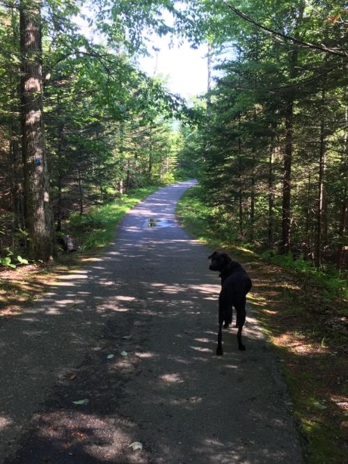 Bike Path to Liberty Spring Trail