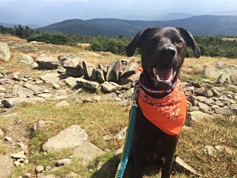 Tucker says hello from the summit of Moosilauke