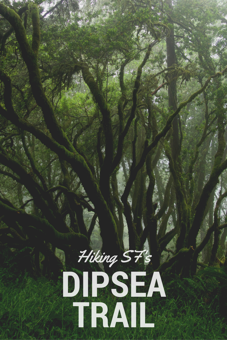 Dipsea Trail in San Francisco