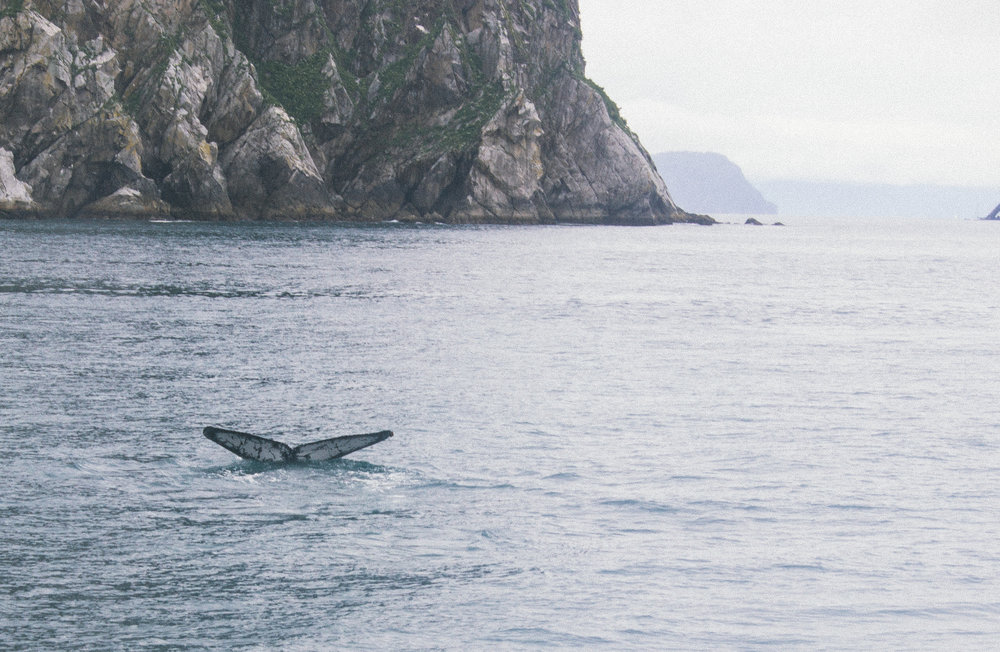 Whale sighting in Resurrection Bay