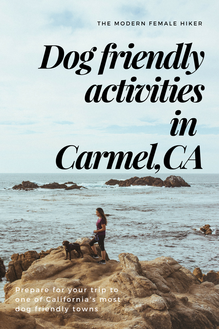 Dog friendly activities in Carmel, CA