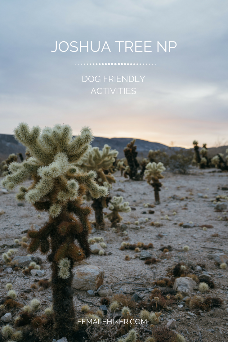 Dog friendly activities in Joshua Tree National Park
