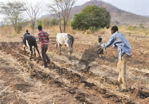 Image by Daily Mail- Example land preparation after first rains