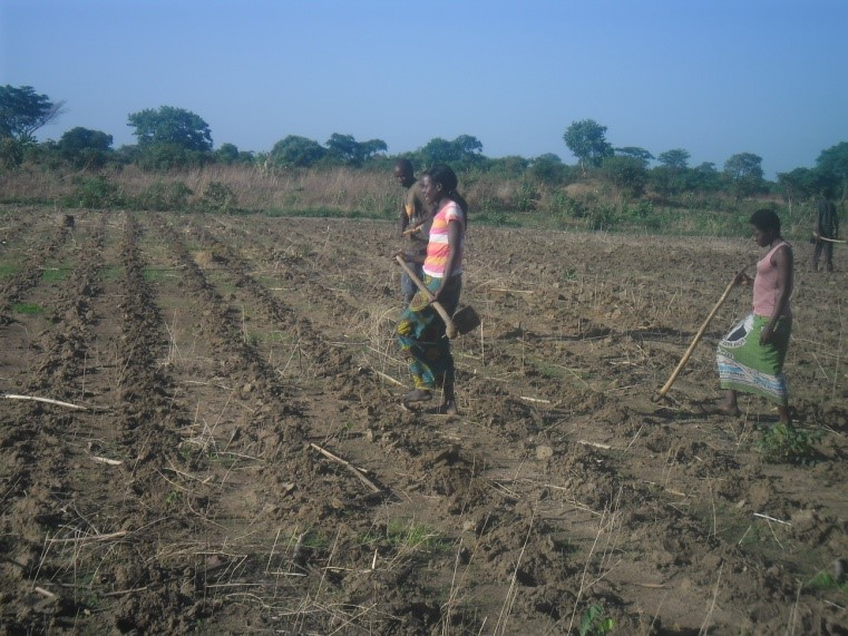 Sunshine Women Farmers  Group in Mpima.jpg