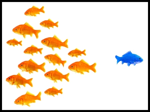 Are you an orange fish or the blue one?