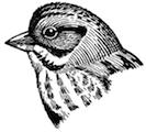 sparrowlogosmall.jpg