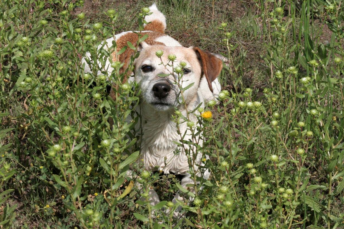 fionagrass