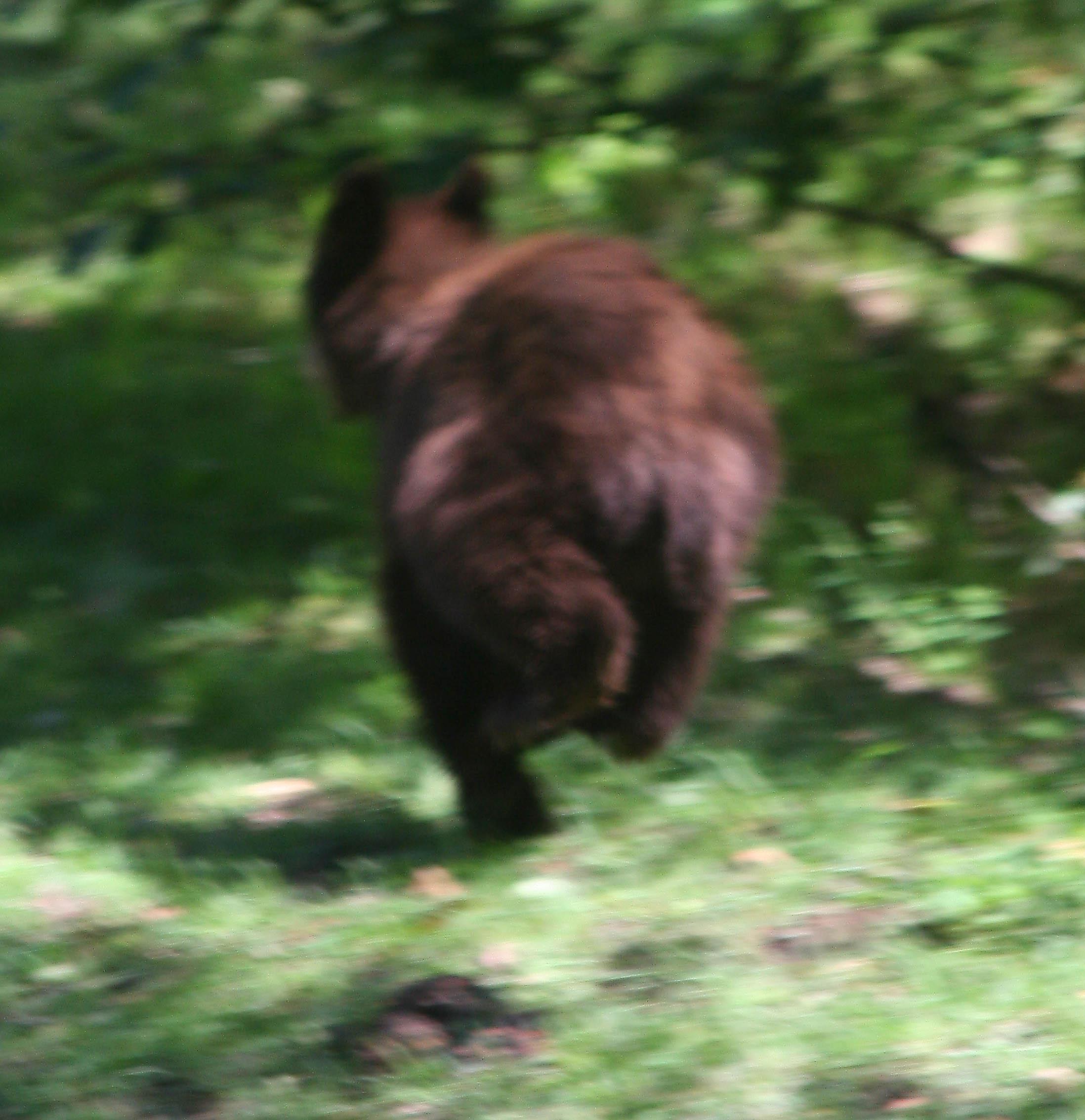 8-10 bear running