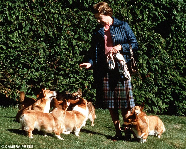 Thanks to the  Ulitmate Corgi  for this photo of Queen Elizabeth                                   and her pack of Pembroke Welsh Corgis.