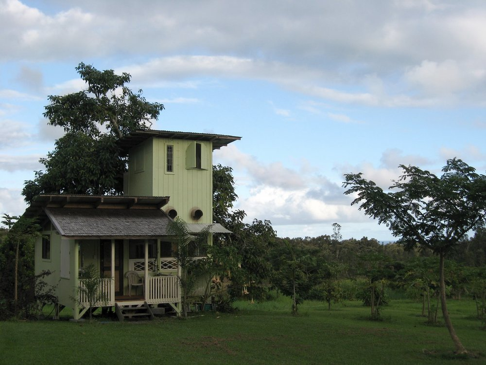 avocado-tree-house.jpg