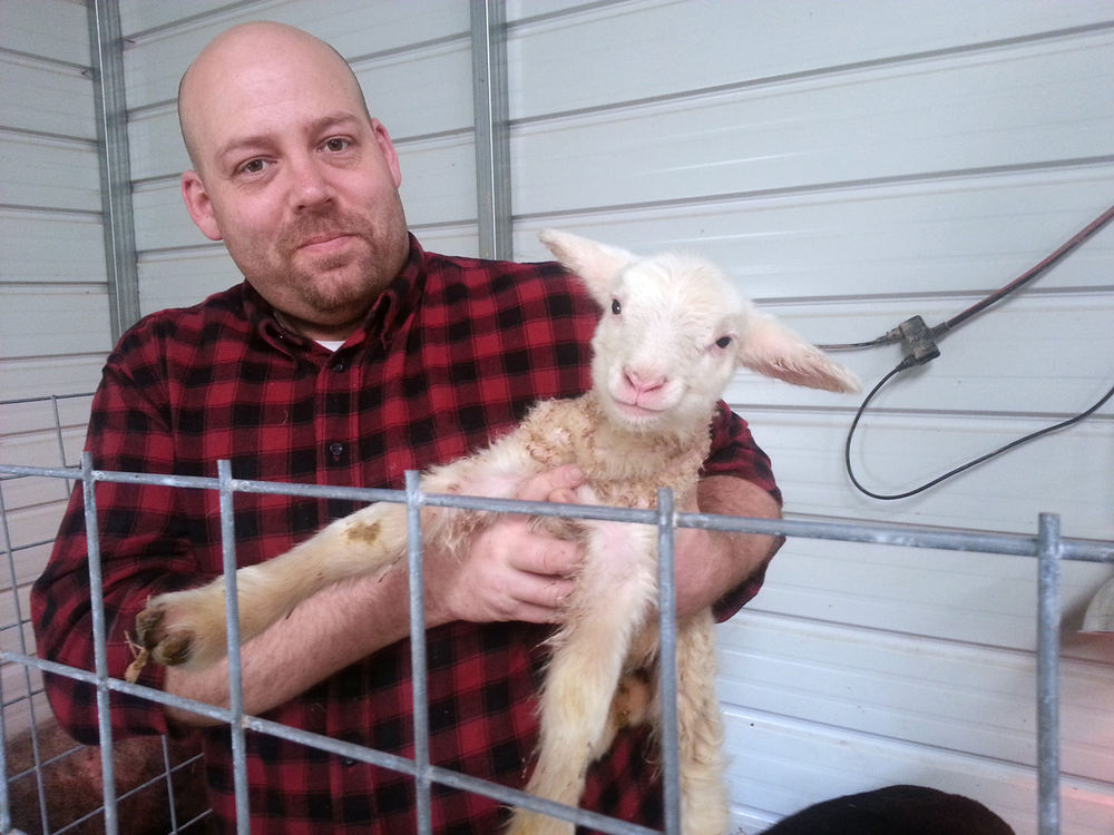 DSD-Newborn-Lamb.png