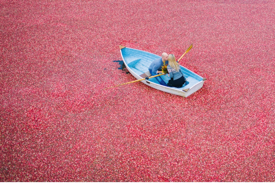 British-Columbia-Cranberry-Farm