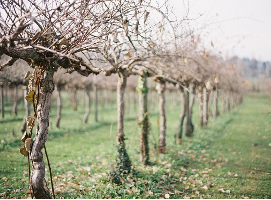 Fall-Vineyard-Wedding-Ideas
