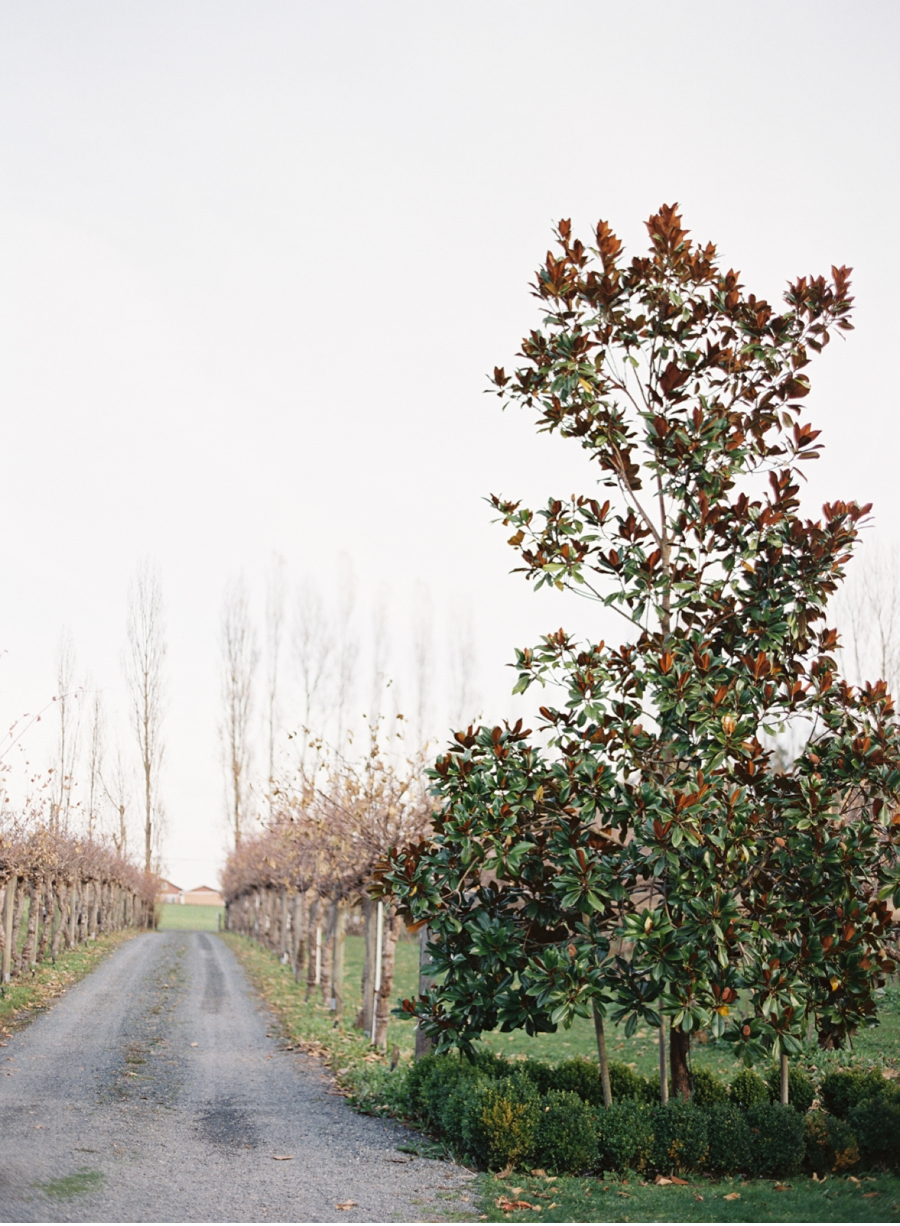 Winter-Vineyard-Wedding-Inspiration