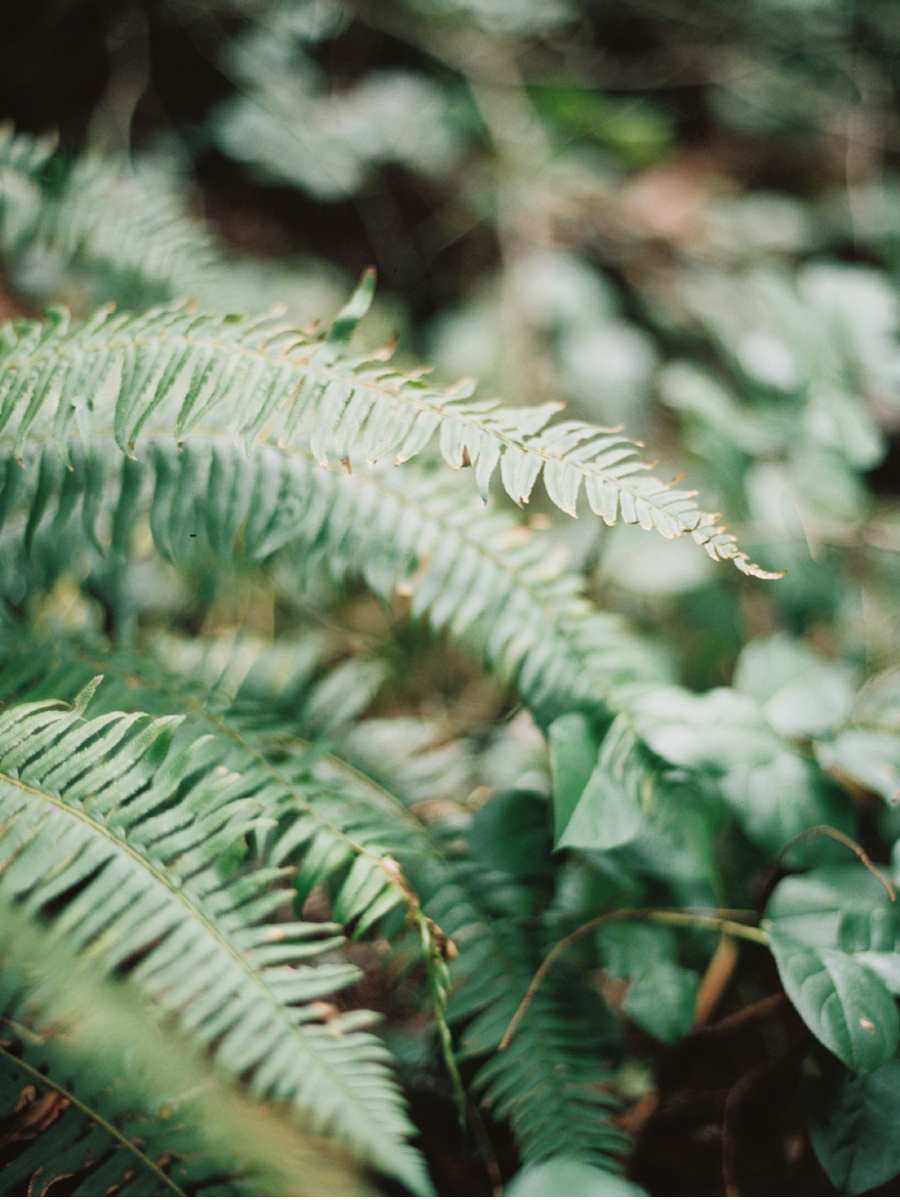 Pacific-Northwest-Forest-Ferns