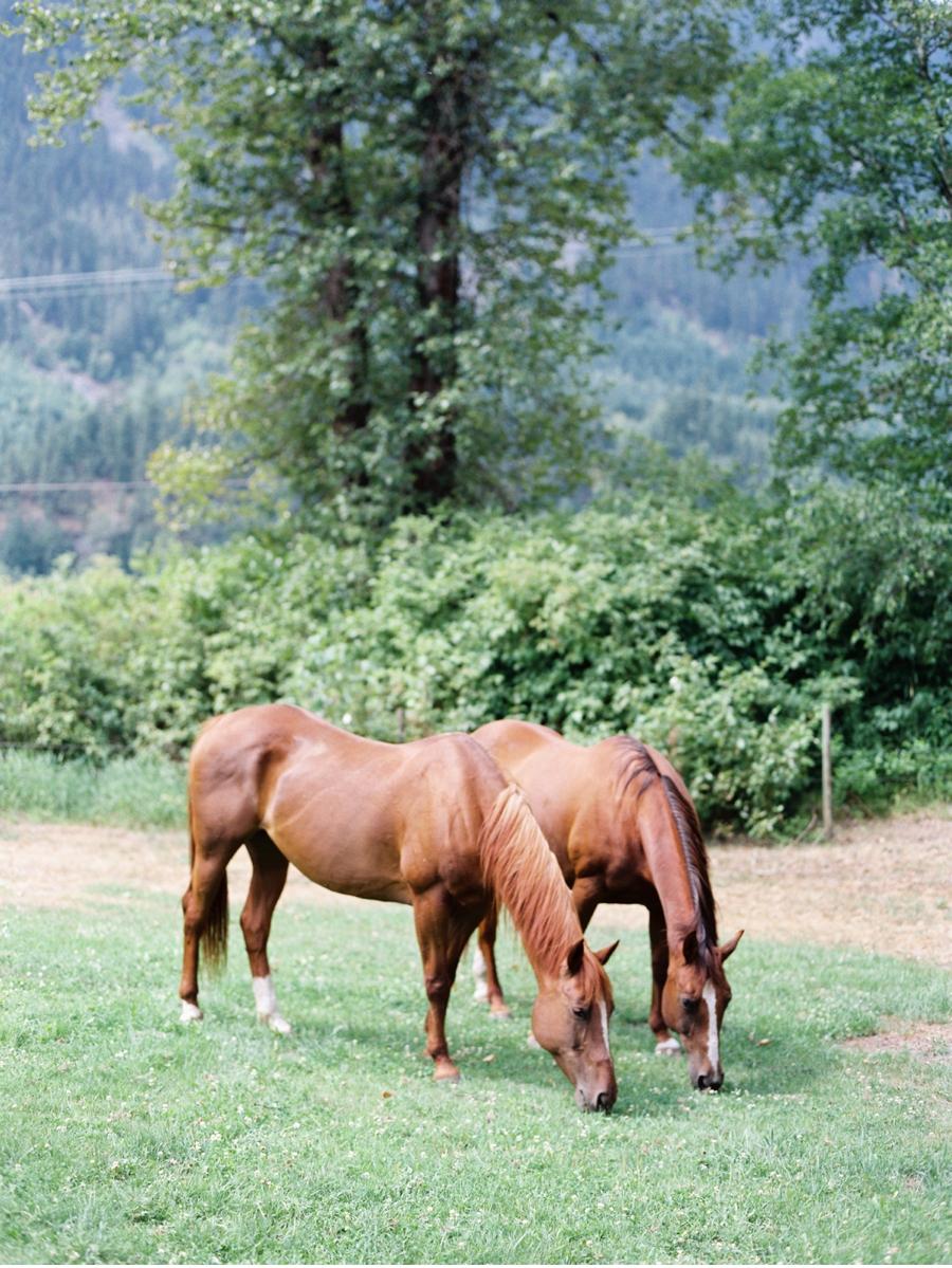 British-Columbia-Farm-Wedding