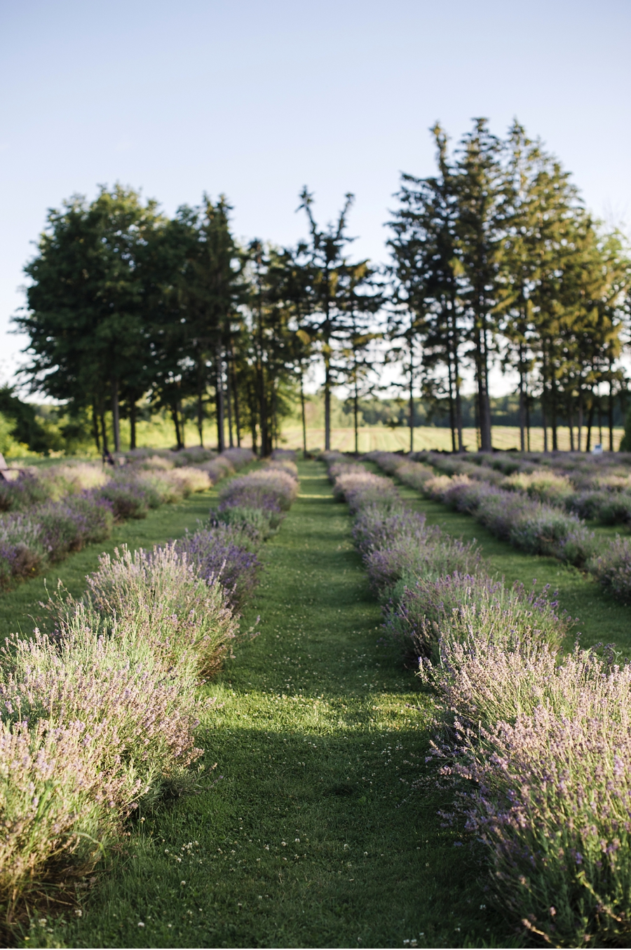 Lavender-Farm-Wedding-Venue
