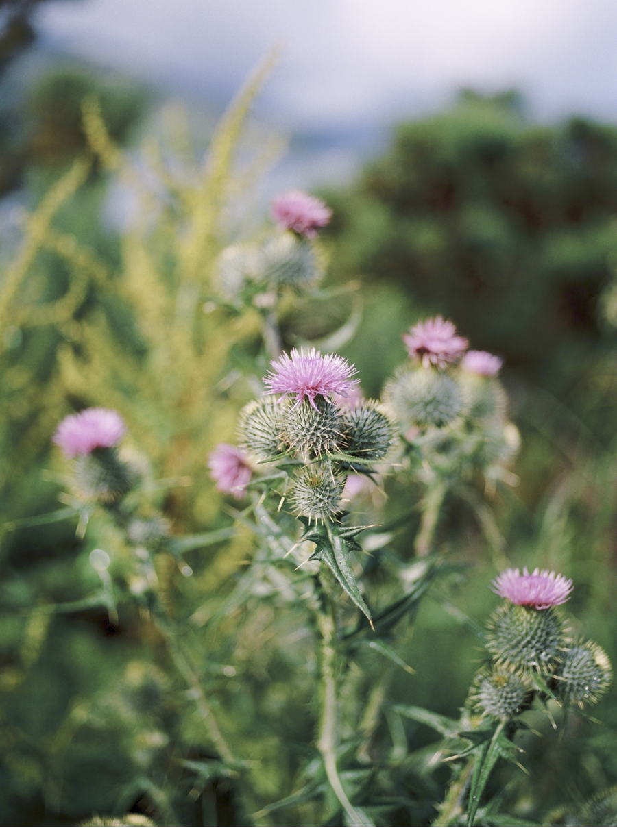Scotch-Thistle-Film-Photograph