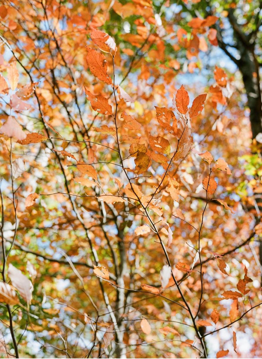 Fall-Colours-Autumn-Portrait-Shoot